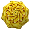Designer umbrella with gift box Yellow Flower